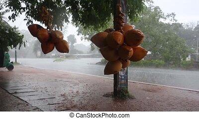 regen fällt, kräuseln, in, a, pfütze