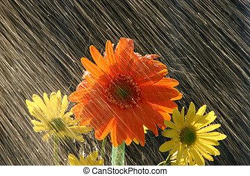 regen, op, bloemen