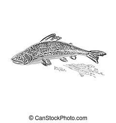 regenbogen, salmonidae, weinlese, forelle