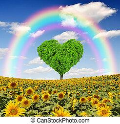 regenboog, boven, zonnebloem veld