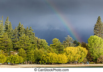 regenboog, op, bewolkt, zealand., bos, nieuwe dag