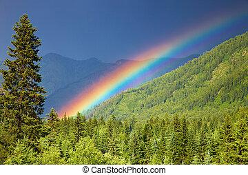 regenboog, op, bos