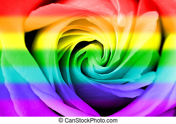 regenboog, vlag, roos