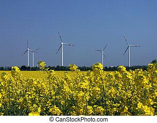 Regenerative energy - Wind energy and rape, regenerative...
