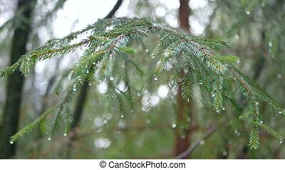 regenwald, tropfen, zweig