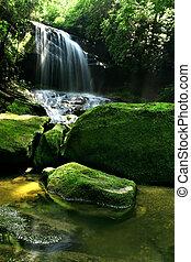 regenwald, wasserfall