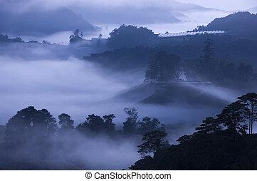 reggel, köd, -ban, tea, farm.