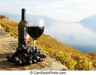 região, vinhedo, vidro, terraço, suíça, vinho, vermelho, ...