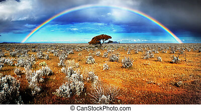 regnbåge, öken