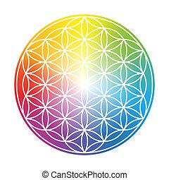 regnbåge, liv, blomma, färgrik, lutning, cirkulär