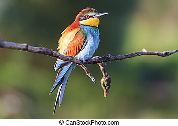 regnbue, det sidder, -, fugl, branch