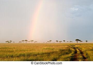 regnbue, ind, den, savanne