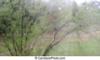 regnerisch, hinten, busch, glas, schlechte, verwischen,...