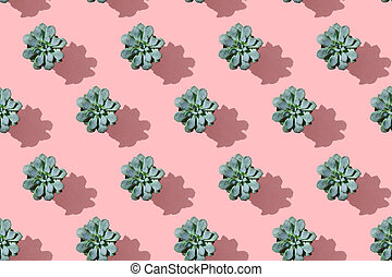 Regular pattern succulent flower in pot on a pink background. Flat lay, floral decor, top view