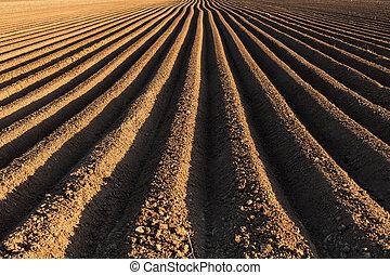 reihen, sowing, kartoffel, fruehjahr, früh, feld, rennender , horizont