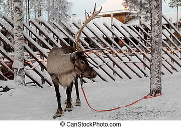 Reindeer against a tree in the village of Santa Claus.