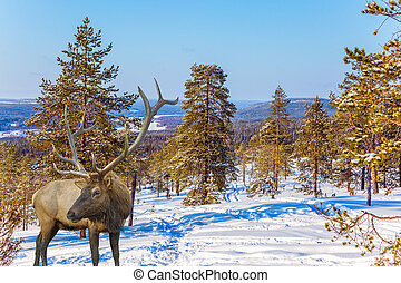 Reindeer in forest
