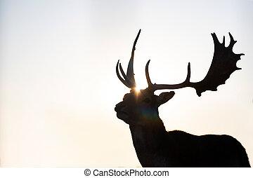 Reindeer in sunset.