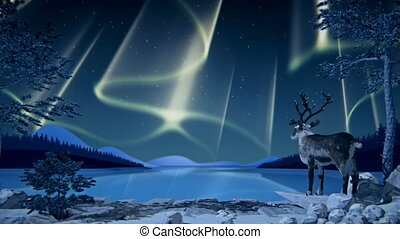 Reindeer looks at Northern Lights (Aurora borealis) reflected on a lake.
