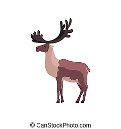Reindeer polar arctic animal vector Illustration on a white background