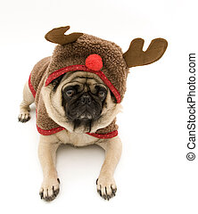 Reindeer Pug Laying Down