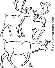 reindeer - vector outlines - black and white vector...