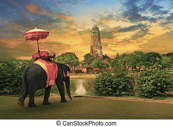reino, tailandés, elefante, aliño