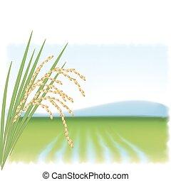 reisanbau, und, a, zweig, von, reif, rice., vektor,...