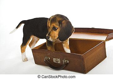 reise, hund