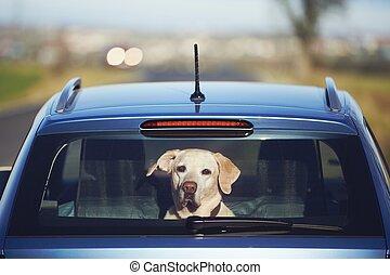reise, mit, hund