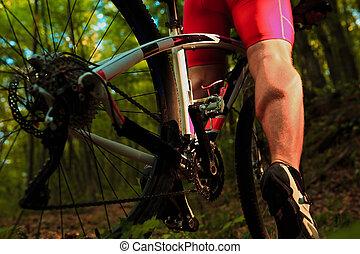 reiten, radfahrer, holz, fahrrad