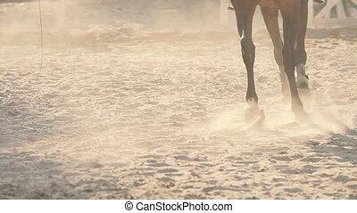 reiten, training, pferd, boden