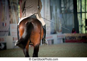 reiter, auf, a, pferd