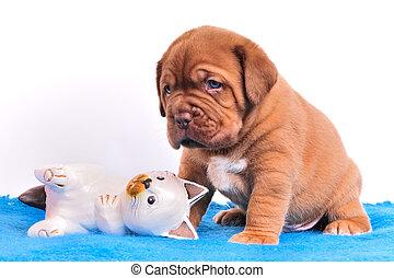 reizend, dogue, de, bordeaux, puppie, gleichfalls, sitzen, bei, hölzern, katz