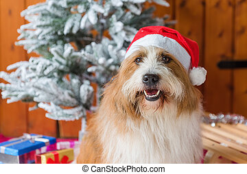 Weihnachtsdeko Hund.Dekoration Weihnachten Hund