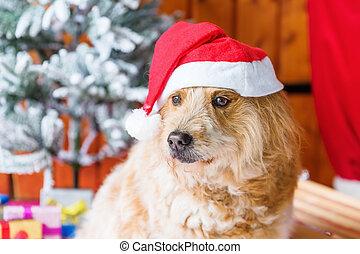 Weihnachtsdeko Hund.Reizend Elo Hund Dekoration Front Weihnachten Bild Elo