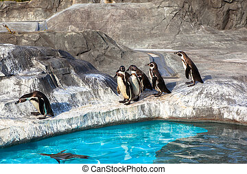 reizend, humboldt, pinguine, in, a, zoo