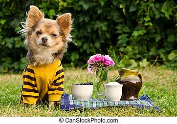 reizend, hund, an, der, picknick, in, sommer, kleingarten