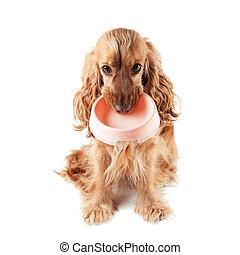 reizend, hund, fragt, essen