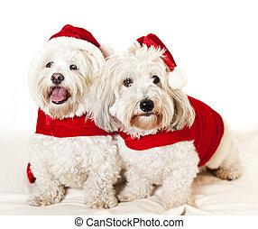 reizend, hunden, zwei, santa, ausstattungen