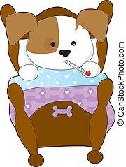 reizend, junger hund, krank
