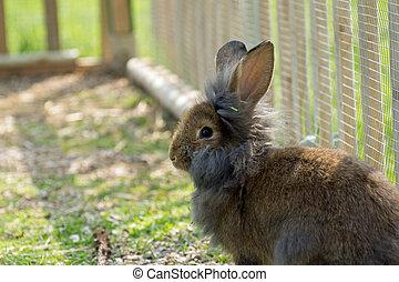 reizend, kanninchen, kaninchen, garten