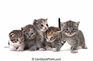 reizend, leicht, babykatzen, freigestellt, neugeborenes baby...
