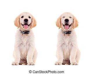 reizend, posen, junger hund, zwei, emotional