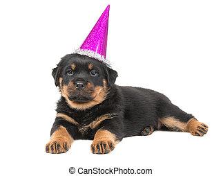 reizend, rottweiler, junger hund, hund, unten liegen, auf, a, weißer hintergrund, tragen, a, rosa, partyhut