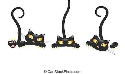 reizend, wenig, satz, katzenkinder, schwarz