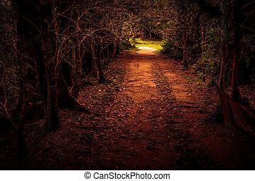 rejtély, út, dob, a, erdő