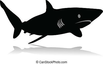 rekin przedstawią w sylwecie