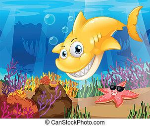 rekin, rozgwiazda, żółte morze, pod, korale