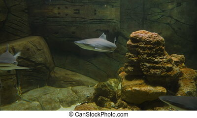 rekiny, akwarium, publiczność